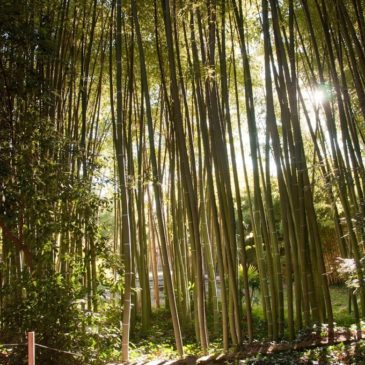 Bambouseraie d'Anduze: um jardim oriental na Provença