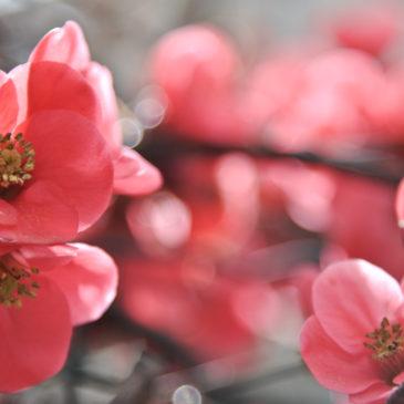 Oito primaveras na Provença