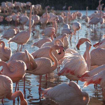 Flamingos na Provence: visitando o Parque Ornitológico de Pont de Gau